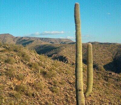1.25 ACRE ARIZONA LAND FOR SALE NEAR KINGMAN, AZ - NO RESERVE!