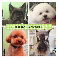 Groomer Wanted - Toiletteur (euse) Recherché