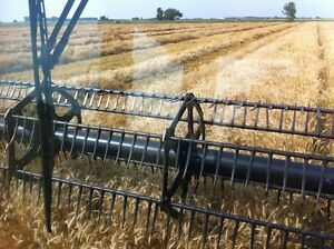 Certified moats winter wheat seed