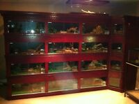 The ONLY Custom enclosures,Snake&Reptile racks with CSA App heat
