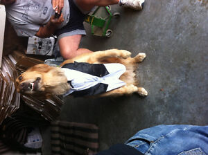 Tux for a dog