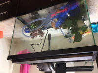 20 gallon aquarium for sale with accessories