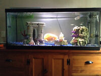 75 Gallon Tank, Stand and Fish