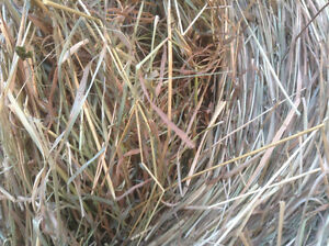 ROUND AND SQUARE BALES FOR SALE