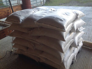 Oats for horses, goats, can deliver, buy 20 bags get 1bag free. Prince George British Columbia image 2