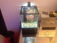 Nano fish tank complete with all you need.