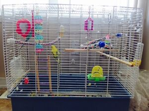 Peruches a vendre - Budgies for sale