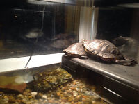 pet turtles