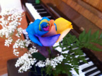 MUSICAL EDUCATION WITH PROFESSIONALS