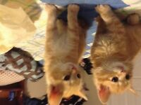 Giving away two kittens