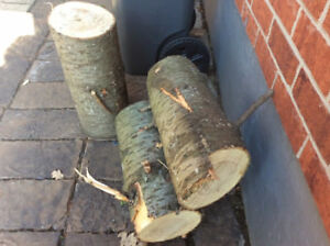 PINE TREE LOGS FOR FREE