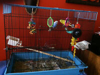 2 budgies, cage and accessories