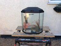 6 sided cool water aquarium fish tank set up