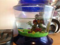 Cheap fish bowl !!