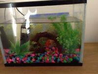 Two Goldfish in 8 litre tank £10 SOLD !!!!!