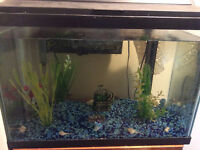 20 gallon tropical fish tank with all accessories & 1 fish