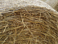 oat and barley straw