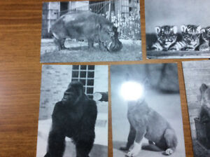 ANIMALS AT BRONX ZOO POSTCARDS
