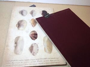 """2 NEW with tags shell prints on canvas - 13.5"""" x 20"""" Cambridge Kitchener Area image 4"""
