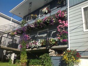 Upper Floor 3BDRM to rent AVAIL MAY 1st 2017