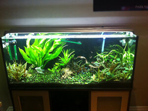 65 gallon rimless tank with stand