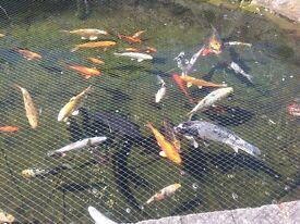 Full pond set up