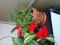 Free Plants with pots and saucers (2)
