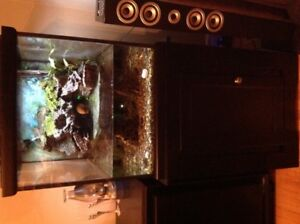 60 gal fish tank, stand and everything you need.