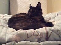 Extremely friendly kinda funny looking Tortie Female