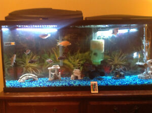 55 gal fish tank for sale