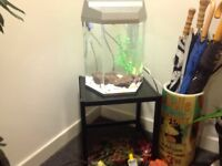 Fish tank glass 40 litres.