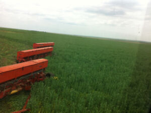 Forage Peas for sale