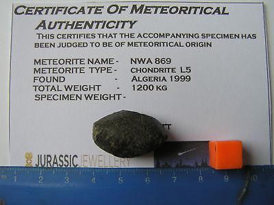 Super Whole  NWA 869 Stone Chondrite Meteorite