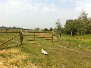 35 acres pastureland to rent