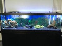 125 gl aquarium