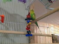 Birds - parrots and large flight cage