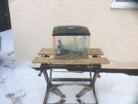 Complete cool water aquarium fish tank set up