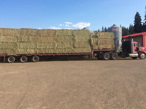 EXCELLENT QUALITY COW AND HORSE HAY FOR SALE Williams Lake Cariboo Area image 2