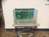 2FT open toped aquarium vivarium fish tank