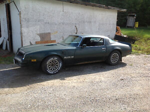 1976 Trans-Am project vehicle