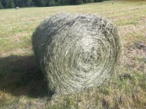 4x5 Round Bales***Timothy Horse Hay***