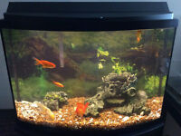 Large Fish Tank (FOR SALE)