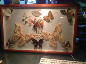 Real Butterflies Vintage Framed Butterfly Collection