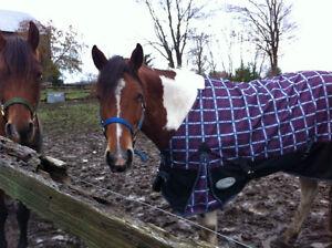 Horse blanket repairs