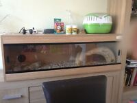 Reptile vivarium set up