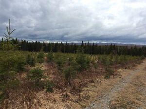 Terre à bois avec chemin cours d'eau et plantation