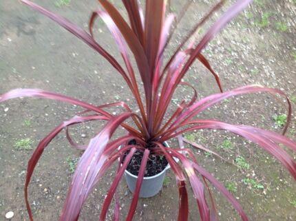 Plants sale  Colyton Penrith Area Preview