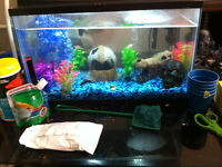 10  Gallon Fish Tank With Accessories and A Dalmation Molly Fish