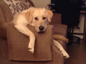 Pet sitting in my home in Waterdown Experienced dog handler