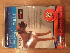 Dog Harness and Lead Set **Brand New**